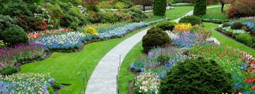 Artistic Landscaping – Color Theory in Landscaping