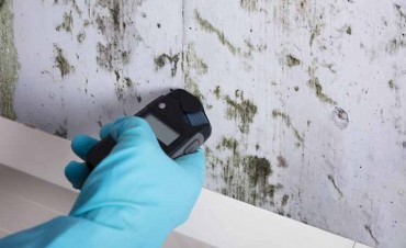 Mold in the Home? Call One of the Mold Remediation Services Raleigh North Carolina Now!