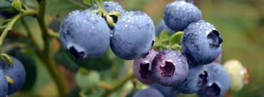 Have You Considered Buying from a Fruit Tree Nursery Online?